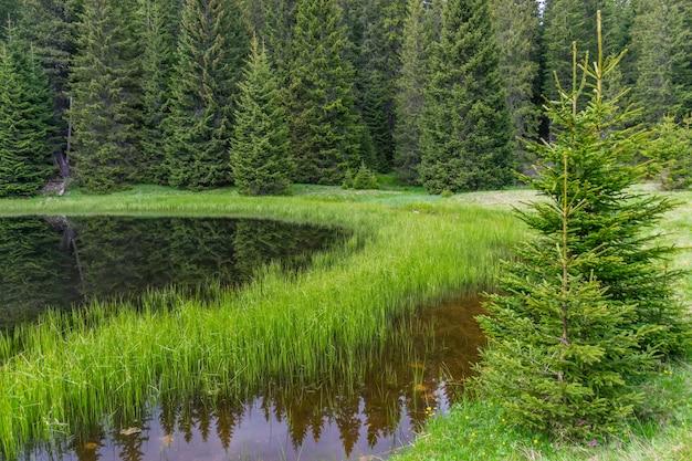 Malownicze jeziorko znajduje się daleko w lesie.