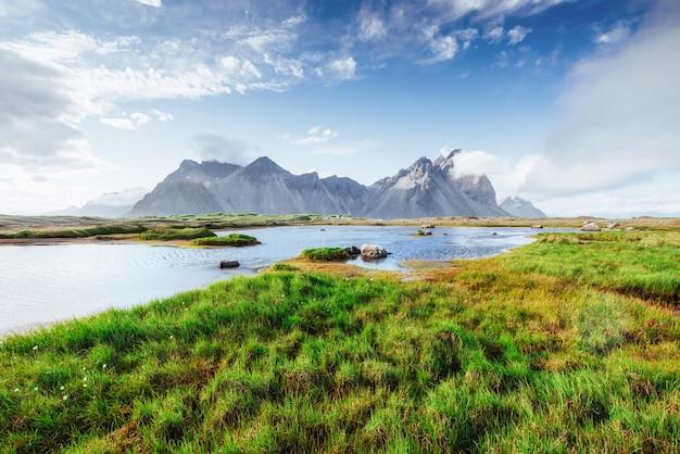 Malownicze krajobrazy lasów i gór islandii. dziki błękitny łubin kwitnie w lecie