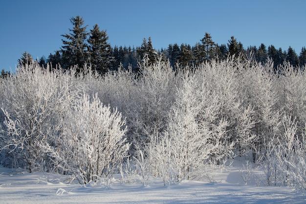 Malownicze piękno i zabawa zimą