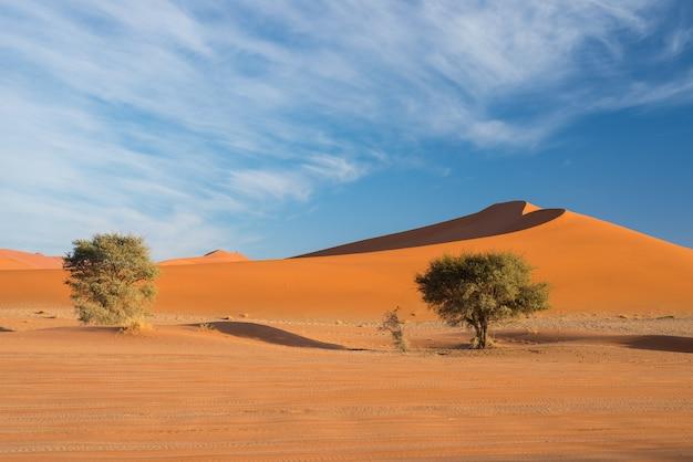 Malownicze sossusvlei i deadvlei, glina i solniczka z plecionymi drzewami akacji otoczonymi majestatycznymi wydmami