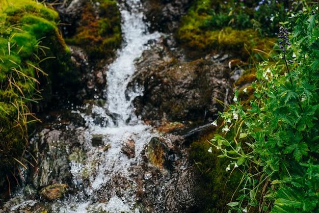 Malownicze tło z czystym strumieniem wody źródlanej wśród gęstego mchu i bujnej roślinności.