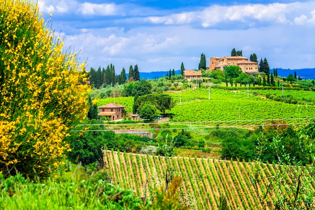 Malownicze winnice toskanii, słynny region winiarski włoch
