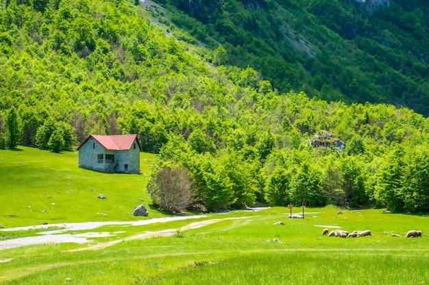 Malownicze zielone łąki w pobliżu dużych wysokich gór.