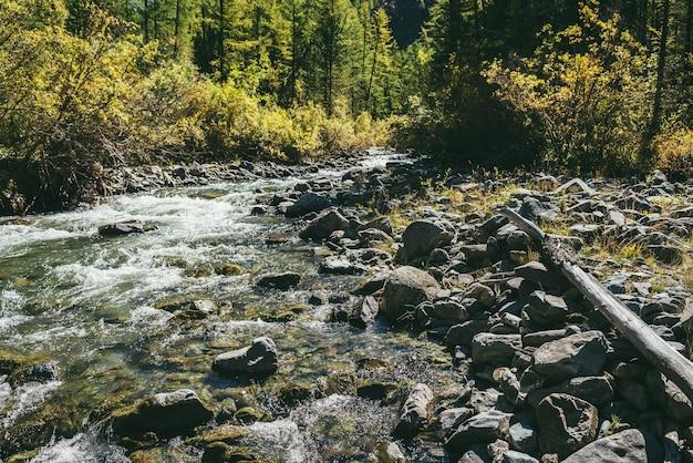 Malowniczy alpejski krajobraz z górską rzeką w dzikim lesie jesienią w promieniach słońca. żywe jesienne krajobrazy z piękną rzeką wśród drzew i zarośli w słoneczny dzień. górski potok w lesie w czasie jesieni.