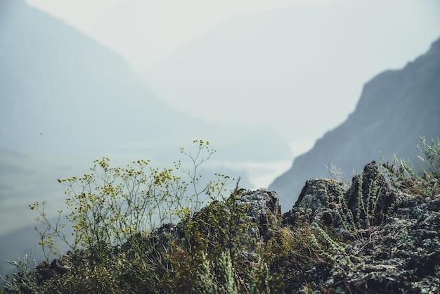 Malowniczy alpejski krajobraz z małe żółte kwiaty i zielone trawy na skałach na tle górskiej rzeki w rozmyciu. piękne górskie krajobrazy z dziką roślinnością na skałach i sylwetkach gór.