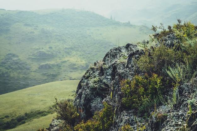 Malowniczy alpejski krajobraz z małymi żółtymi kwiatami i zielonymi trawami na skałach na tle zielonych wzgórz. piękna, żywa górska sceneria z żółtymi małymi kwiatami i dziką roślinnością na skalnym klifie