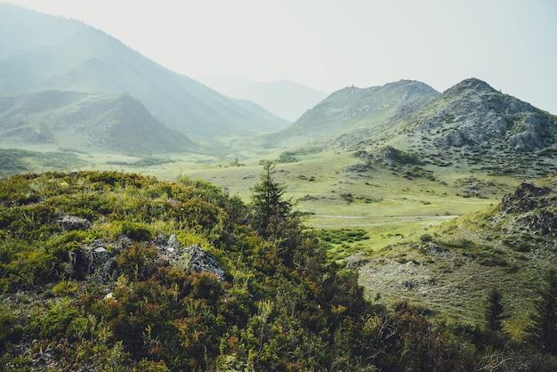 Malowniczy alpejski krajobraz z piękną jodłą wśród zarośli i dzikiej roślinności na tle wysokich gór we mgle. klimatyczna górska sceneria z drzewem iglastym wśród dzikiej roślinności na skałach.