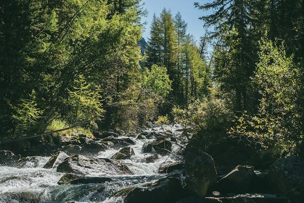 Malowniczy alpejski krajobraz z potężną górską rzeką w dzikim lesie w słońcu. żywe jesienne krajobrazy z piękną rzeką wśród drzew i zarośli w słoneczny dzień. rozpryski na progach burzliwej rzeki.