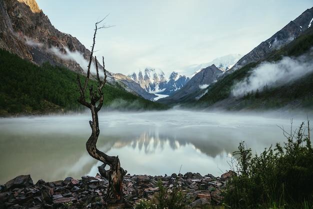 Malowniczy alpejski krajobraz z suchym drzewem na brzegu zielonego lustra górskiego jeziora i ośnieżonych gór w słońcu. piękna sceneria z ośnieżonymi górami odbiciem nad jeziorem lustrzanym i niskimi chmurami w dolinie.