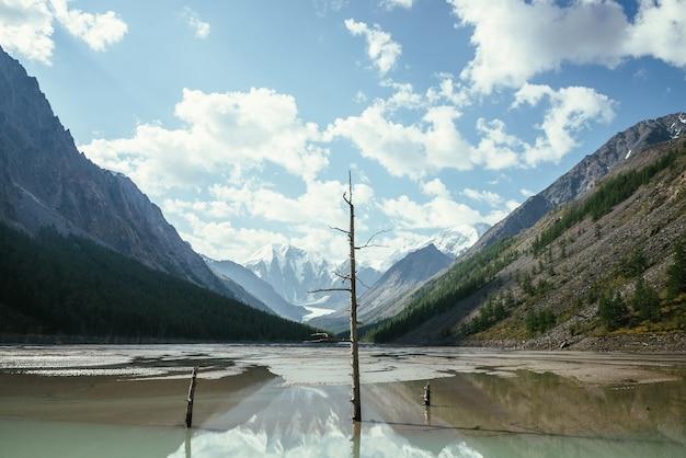 Malowniczy alpejski krajobraz z suchymi drzewami na pięknym płytkim górskim jeziorze w górskiej dolinie od zaśnieżonych gór pod zachmurzonym niebem. słoneczna górska sceneria z lustrzanym jeziorem polodowcowym w wysokich górach.