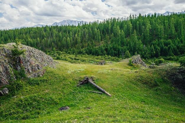 Malowniczy alpejski krajobraz z zieloną górską doliną i lasem na wzgórzu na tle góry ze śniegiem pod zachmurzonym niebem. żywe górskie krajobrazy z powalonym drzewem na zielonym wzgórzu w pobliżu skały z porostami.