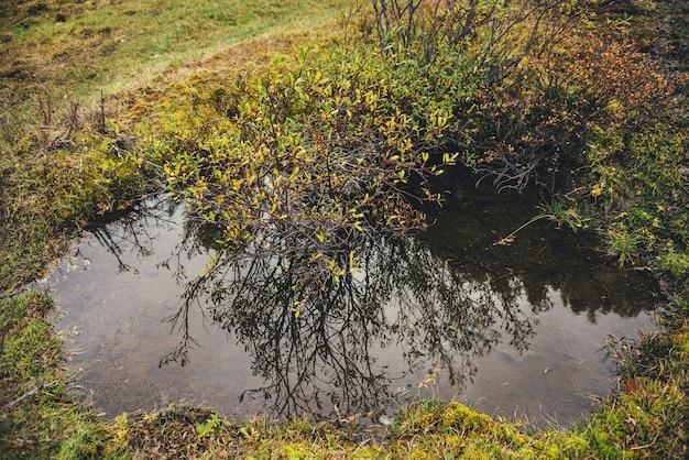Malowniczy charakter tła z dzikiej górskiej flory w złotych jesiennych kolorach. żółte liście nad strumieniem wody w słońcu. złota jesień flora w górach. tle przyrody z bliska żółte liście.