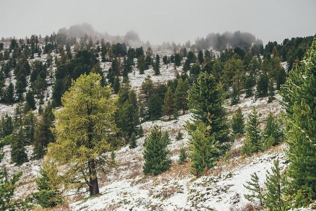 Malowniczy górski krajobraz z drzewami iglastymi na pokrytym śniegiem zboczu w jesiennych kolorach po opadach śniegu. piękna jesienna sceneria z żółtym modrzewiem i zielonymi drzewami na stromym zboczu góry ze śniegiem.