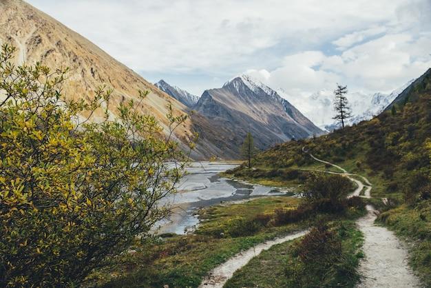 Malowniczy jesienny krajobraz z pięknym krzewem o żółtych liściach w górskiej dolinie ze strumieniami wody i wysokimi górami w złotym słońcu. gąszcz ze złotymi liśćmi w górach w jesiennych barwach.