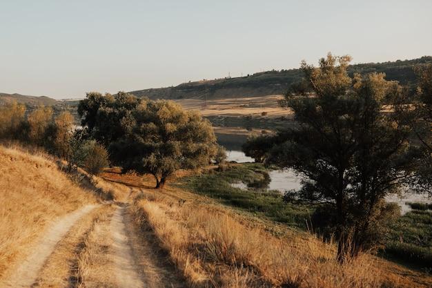 Malowniczy krajobraz wsi z dużymi rozgałęzionymi drzewami i polną drogą. droga wiejska.