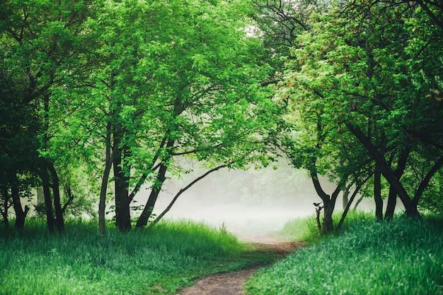 Malowniczy krajobraz z bujną zielenią. wrona na gałęzi. kruk na drzewie. chodnik w parku wczesnym rankiem we mgle. sceneria z drogą przemian wśród zielonej trawy i ulistnienia.