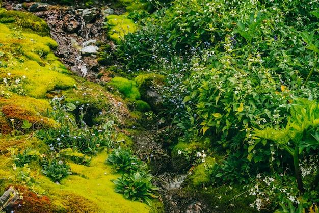 Malowniczy krajobraz z czystym strumieniem wody źródlanej wśród gęstego mchu i bujnej roślinności. górski potok na omszałym zboczu ze świeżą zielenią i wieloma małymi kwiatami. kolorowa sceneria z bogatą roślinnością alpejską.