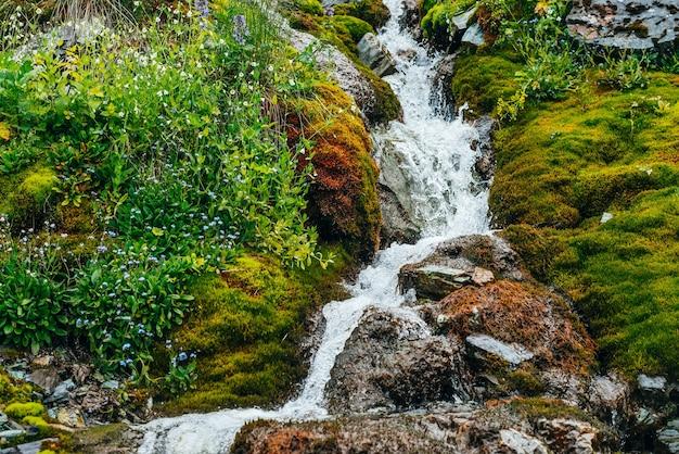 Malowniczy krajobraz z czystym strumieniem wody źródlanej wśród gęstego mchu i bujnej roślinności