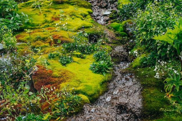 Malowniczy krajobraz z czystym strumieniem wody źródlanej wśród gęstego mchu i bujnej roślinności.