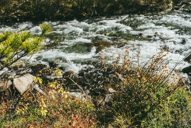 Malowniczy krajobraz z gałęziami z żółtymi i czerwonymi liśćmi na tle bokeh jasnego górskiego potoku w czasie jesieni. kolorowa sceneria jesiennego lasu z pięknymi złotymi liśćmi i górską rzeką.