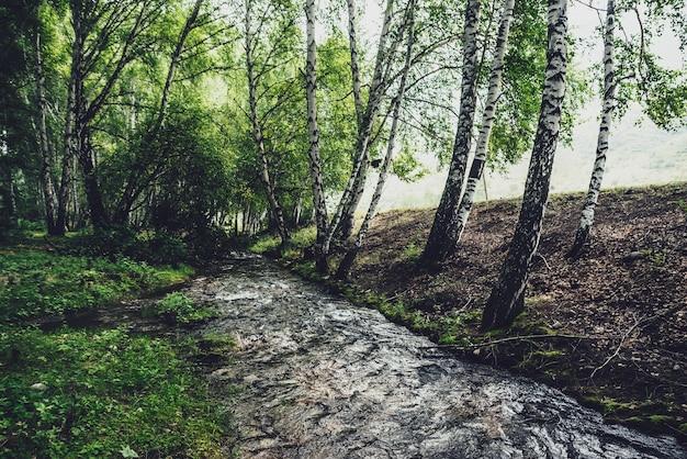 Malowniczy krajobraz z małą rzeką w brzozowym gaju w odcieniach vintage. klimatyczna sceneria lasu z zieloną górską rzeką z przejrzystą wodą i kamienistym dnem. czysta woda w pięknym górskim potoku