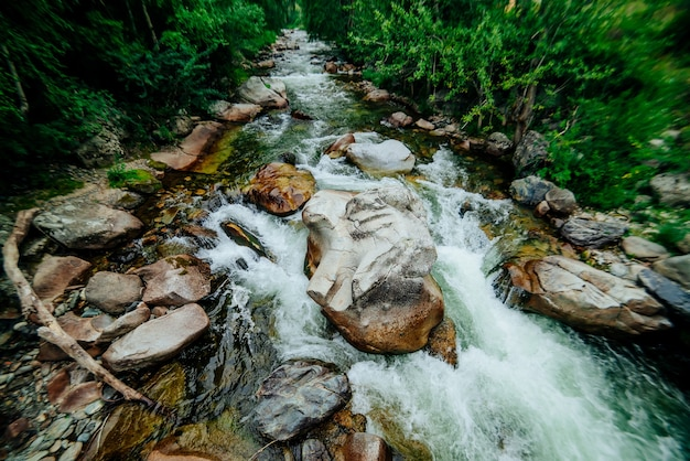 Malowniczy krajobraz z pięknym górskim potokiem z zieloną wodą wśród bujnych zarośli w lesie. idylliczna zielona sceneria z rzeczką i bogatą zielenią. zielona woda w górskim potoku wśród dzikiej flory.