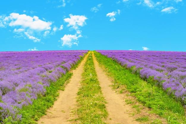 Malowniczy krajobraz z pięknym lawendowym polem i polną drogą