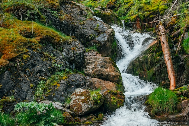 Malowniczy krajobraz z pięknym wodospadem w lesie wśród bogatej roślinności. atmosferyczna leśna sceneria ze zwalonym pniem drzewa w górskim potoku. woda źródlana wśród dzikich roślin i mchów na skałach.