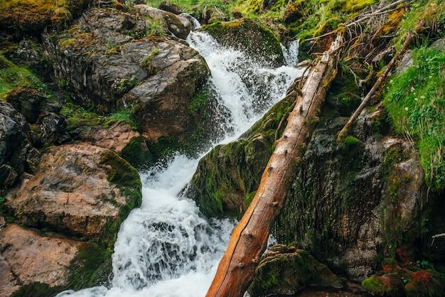 Malowniczy krajobraz z pięknym wodospadem w lesie wśród bogatej roślinności. klimatyczna, leśna sceneria z zwalonym pniem drzewa w górskiej potoku. woda źródlana wśród dzikich roślin i mchów na skałach.