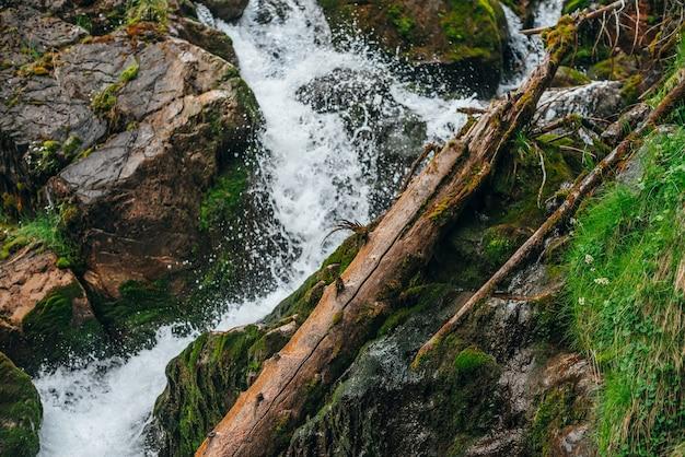 Malowniczy krajobraz z pięknym wodospadem w lesie wśród bogatej roślinności. zatrzymany ruch rozprysków. czysta woda źródlana za zwalonym pniem drzewa. klimatyczna, leśna sceneria z dzikim górskim potokiem.