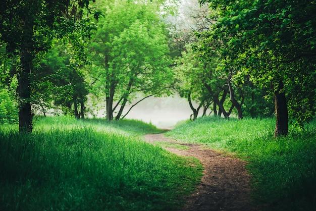 Malowniczy krajobraz z pięknymi zielonymi liśćmi. chodnik pod drzewami w parku wczesnym rankiem we mgle. kolorowa sceneria z drogą przemian wśród zielonej trawy i ulistnienia. żywe naturalne zielone tło.
