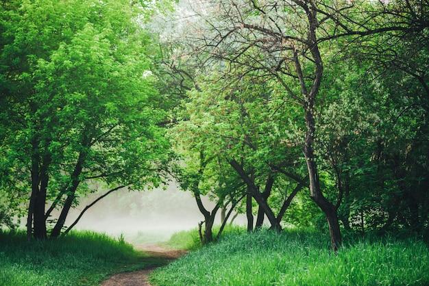 Malowniczy krajobraz z pięknymi zielonymi liśćmi. chodnik pod drzewami w parku wczesnym rankiem we mgle.