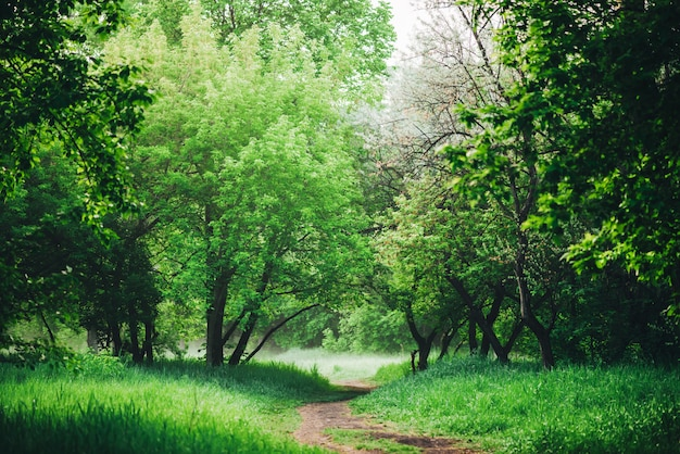 Malowniczy krajobraz z pięknymi zielonymi liśćmi.