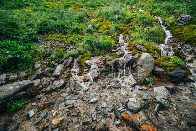 Malowniczy krajobraz z wieloma czystymi źródlanymi strumieniami wśród gęstego mchu i bujnej roślinności.