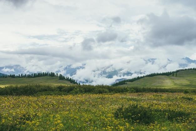 Malowniczy krajobraz z zielonymi wzgórzami pokrytymi trawami i kwiatami na tle zielonych lasów gór w niskich chmurach. klimatyczna sceneria z bujną roślinnością wyżyn i zielonymi górami pokrytymi niskimi chmurami