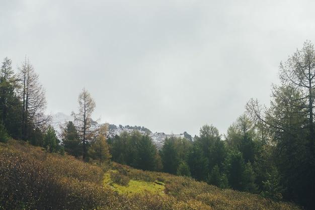 Malowniczy krajobraz z żółtym modrzewiem wśród drzew iglastych i jesienną roślinnością na zboczu wzgórza z widokiem na ośnieżoną górę w niskich chmurach. piękna sceneria z górskim lasem i górą ze śniegiem.