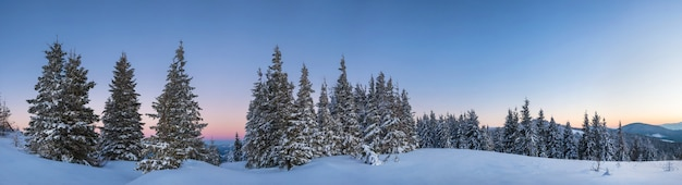 Malowniczy krajobraz zaśnieżonego lasu rosnącego na wzgórzach wśród zasp różowo-fioletowych zachód słońca w mroźny zimowy wieczór.