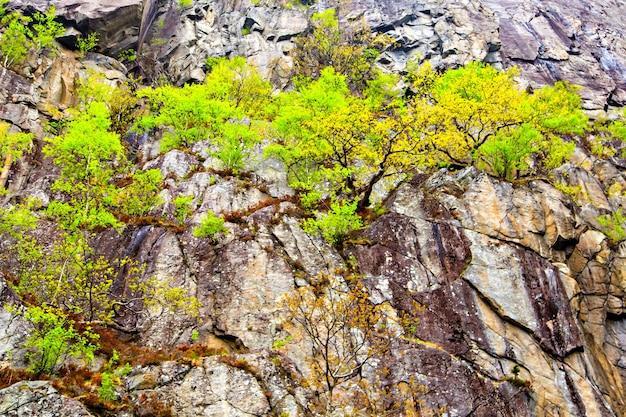 Malowniczy krajobraz ze skałami i drzewami
