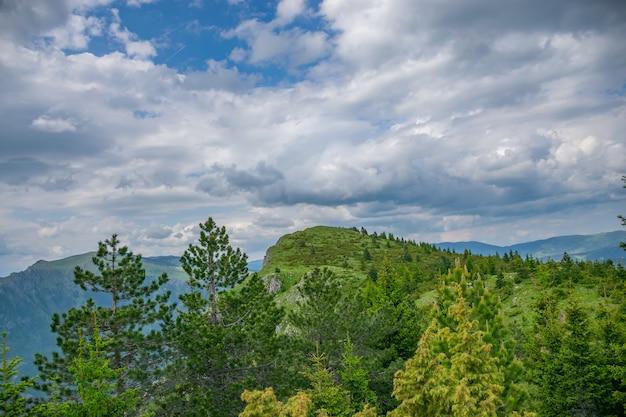Malowniczy las na zboczu wysokiej góry.