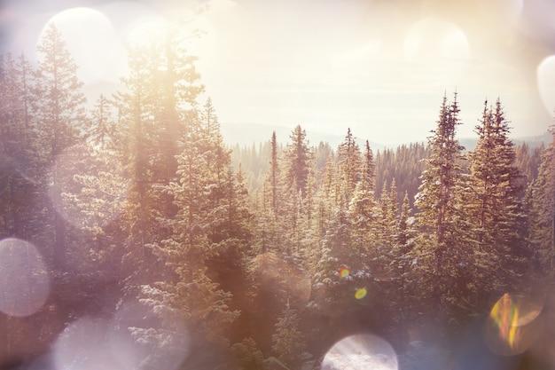 Malowniczy, pokryty śniegiem las w sezonie zimowym. dobre na boże narodzenie w tle.