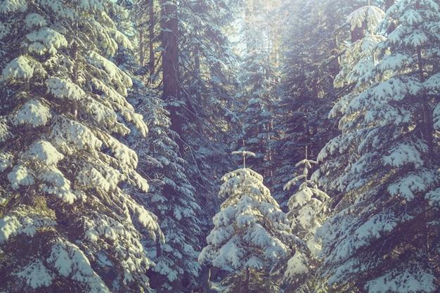 Malowniczy pokryty śniegiem las w sezonie zimowym. dobre na boże narodzenie w tle.