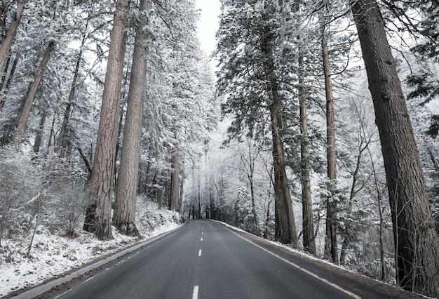 Malowniczy pokryty śniegiem las w sezonie zimowym.