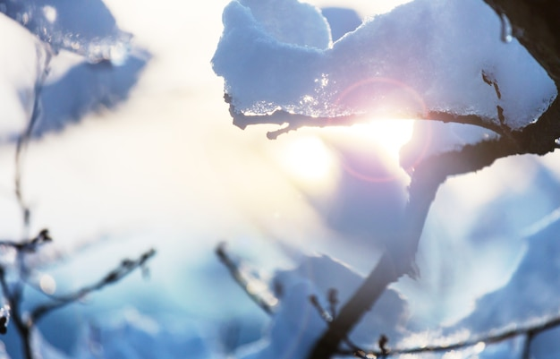 Malowniczy, pokryty śniegiem las zimą