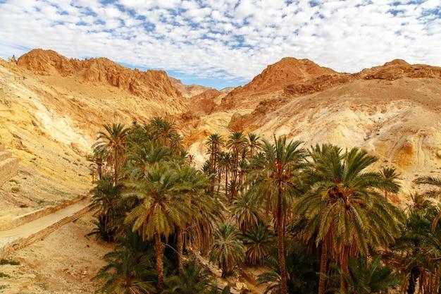 Malowniczy widok na górską oazę chebika.