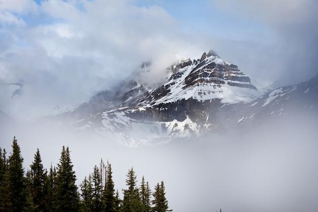 Malowniczy widok na góry w canadian rockies w sezonie letnim
