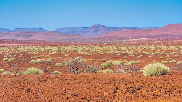 Malowniczy widok na obszar koncesyjny palmwag z milkbushes w namibii w afryce.