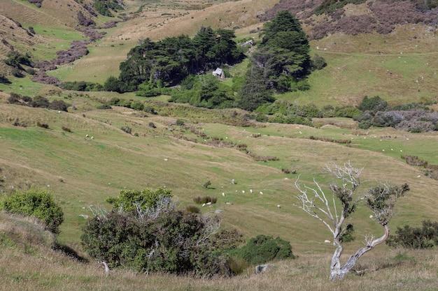 Malowniczy widok na okolicę na półwyspie otago