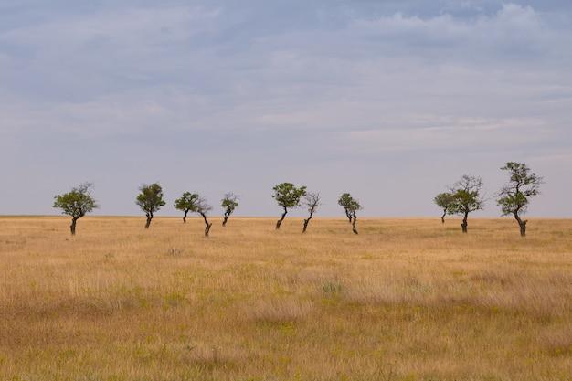 Malowniczy widok na rozległe suche pole z suchą trawą i kilkoma zielonymi drzewami w tle w pochmurny wiosenny dzień. zewnętrzne ujęcie przestronnej żółtej łąki z kilkoma samotnymi samotnymi drzewami o gęstych liściach