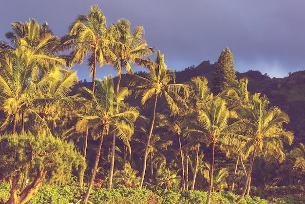 Malowniczy widok na wyspę hawaje
