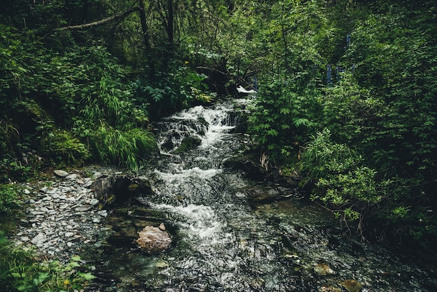 Malowniczy zielony krajobraz z czystym górskim strumieniem wśród bujnej roślinności i zarośli w lesie. klimatyczna sceneria z wodą źródlaną w górskim potoku wśród dzikiej roślinności. mała rzeka wśród traw.